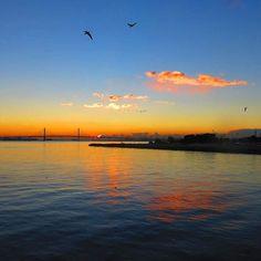 【shougun_san】さんのInstagramをピンしています。 《#おはようございます #goodmorning #morningglow #朝焼け #雲 #clouds #seamew #sea #海 #空 #sky #birds #wildbirds #yokohamabaybridge #findyouryokohama #横浜ベイブリッジ #横浜 #yokohama #canon #canonphoto #ig_japan #wp_japan #lovers_nippon #pics_jp #eclectic_shotz #art_of_japan #tokyocameraclub #team_jp》