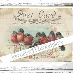 Postcard Birds Large Image Instant Download by GraphicMarketplace