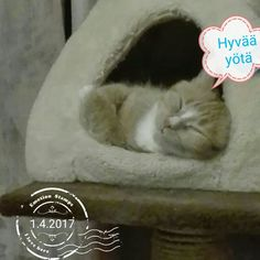 Mimmi unilla