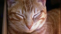 Here's what you can do to make sure you're raising a happy cat
