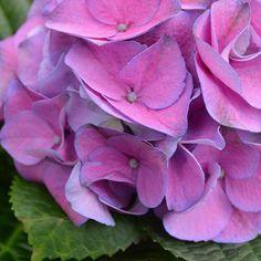 #gardensupplyco #shoplocal #garden #gardener #plant