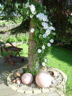 Garten Blüte Clematis an Baum Gestaltungsidee