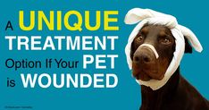 Negative Pressure Wound Therapy: State-of-the-art Wound Treatment. Your pet's body heals a wound in four sequential, overlapping phases -- learn what these are. http://healthypets.mercola.com/sites/healthypets/archive/2014/10/29/wound-healing.aspx