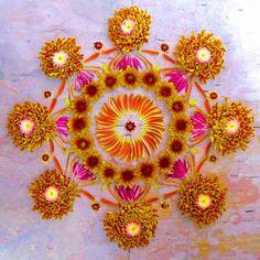 Artist Kathy Klein makes beautiful mandalas using various plants and flowers. She began creating flower mandalas in Flower Circle, Flower Mandala, Mandala Art, Flower Art, Mandala Stencils, Art Flowers, Flower Garlands, Flower Petals, Chakras