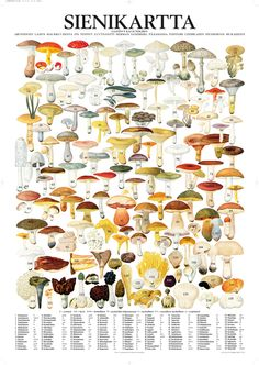 Important to have and lots of fun to pick mushrooms in Sweden. Learn Swedish, Mushroom Fungi, Science And Nature, Botanical Illustration, Survival Skills, Botanical Prints, Natural History, Stuffed Mushrooms, Birds