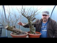 Copy of Bonsai Techniques - Air Layering Part II Bonsai Tree Types, Bonsai Plants, Bonsai Garden, Bonsai Trees, Air Layering, Japanese Tree, Plant Covers, Miniature Trees, Farm Gardens