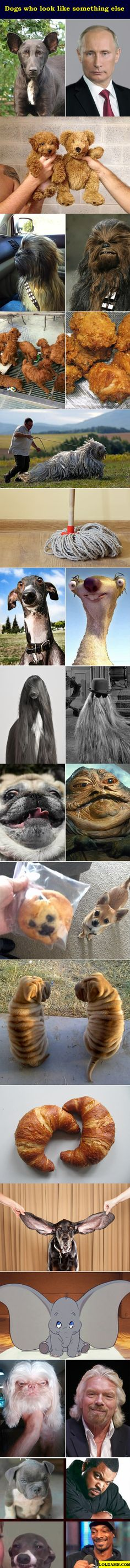Dogs Who Look Like Something Else.