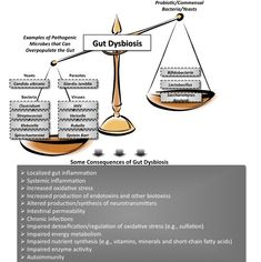 """Gut Dysbiosis:  One of the physical conditions in a body that can lead to immune dysregulation is something known as """"gut dysbiosis.""""    The """"gut,"""" or gastrointestinal system, simply refers to the long hollow tube that stretches from the tip of your tongue right down to your rectum.    """"Dysbiosis"""" refers to a state of imbalance among the colonies of microorganisms (bacteria, yeast, viruses, parasites, etc.) within your body."""
