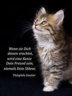 Die 28 besten Bilder von Zitate über Katzen | Quotes about cats