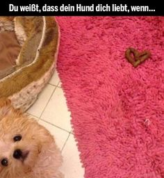 Du weißt, dass dein Hund dich liebt, wenn... (Tiere Bilder) - Tags: herz, hund, liebe