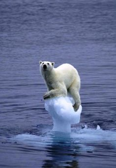 This picture shows global warming to me because the polar bear has barely any ice left and is about to be in the water which shows how it was melted from heat.