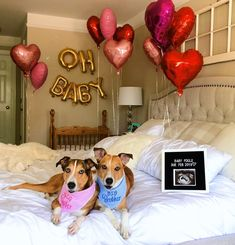 day pregnancy announcement with dog cute ideas Expecting Baby Announcements, Valentines Pregnancy Announcement, Baby Announcement Pictures, Baby On The Way, Baby Love, Ivf Pregnancy, Pregnancy Photos, Valentines Day Baby, Baby Pictures