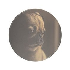 Adorable purebred pug drink coaster - dog puppy dogs doggy pup hound love pet best friend