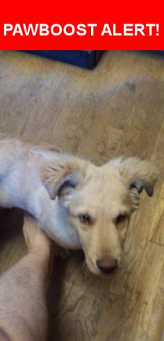 Is this your lost pet? Found in Sacramento, CA 95823. Please spread the word so we can find the owner!  Golden retriever possible lab mix..  Nearest Address: Near Tangerine Ave & Center Pkwy