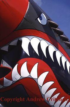 Curtiss Warhawk (with shark-mouth nose art) Ww2 Aircraft, Fighter Aircraft, Military Aircraft, Shark Art, Big Shark, Rhino Art, Propeller Plane, Airplane Art, Ww2 Planes