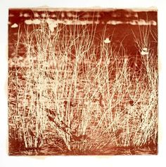 ReedsEtching by paperhatstudio on Etsy, $60.00
