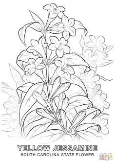 Illinois State Flower coloring page Free Printable Coloring