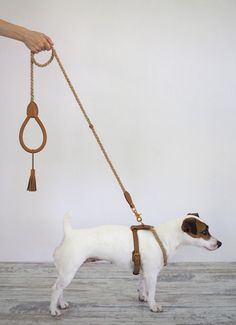 Gorgeous dog harness and leash. Shipping worldwide trending dog products from our store and get up to off. You will not find this rare dog accessories in any other store, so grab this Limited Time Discount Now! Dog Accesories, Pet Accessories, Dog Storage, Ideias Diy, Dog Costumes, Diy Stuffed Animals, Dog Leash, Dog Supplies, Dog Walking