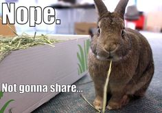 Bunny does not approve of you taking any of her hay, so don't even think about it!  You can see more pictures of Cosette and her bunny brother named Coco at the link below!   http://www.myhouserabbit.com/blog/2013/03/17/hay-day-for-coco-and-cosette/ !