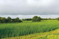 En las llanuras deltaicas y riberas de los caños de la desembocadura del río Sinú se han desarrollado la ganadería y la agricultura.