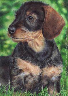 dachshund pen drawing