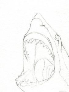 how to draw a shark head step 5