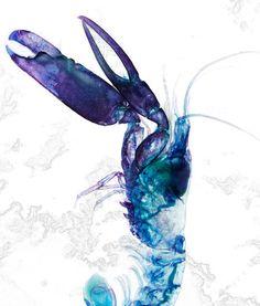 "a prawn from iori tomita's ""new world transparent specimen"" series."