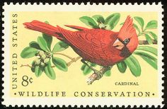 wildlife conservation cardinal - Google Search