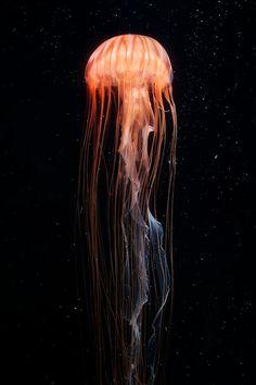 "Animals of the World — (via 500px / Photo ""Basking Shark"" by Jody..."
