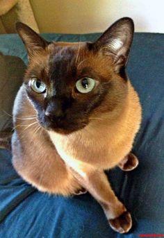 my olive - http://cutecatshq.com/cats/my-olive/