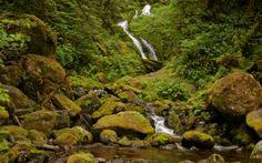 Waterfall near Lake Quinault WA  #landscape #waterfall #near #lake #quinault #photography