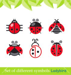 Ladybird ladybug set of symbols vector on VectorStock®