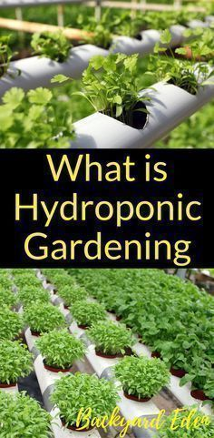 What is hydroponic gardening | Hydroponics