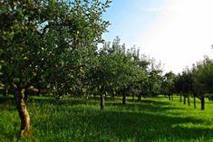 Najobľúbenejšie ovocné stromy a ich rezistentné odrody Garden Pool, Ontario, Plants, Plant, Planets