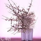 White Japanese quince, Baby's Breath and white glass vase. The all-white construction shows the rich expressions of the gentle flowers and linear Japanese quince branches.  Japanese quince, Baby's Breath  Glass vase  115×92×145cm