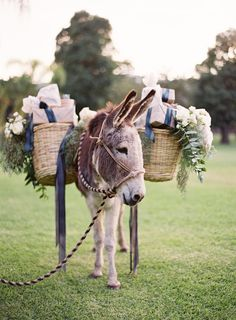 Burro bearing gifts -- at the Jose Villa Wedding Photography Workshop. Pretty darn cute! See more here: http://www.stylemepretty.com/2014/04/09/wedding-day-inspiration-from-the-jose-villa-mexico-workshop/