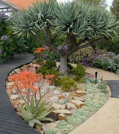 Jenny Smith Gardens is a Melbourne based landscape garden design and garden maintenance company. Providing innovative and exciting landscape design, planting and maintenance for over 25 years Succulent Landscaping, Front Yard Landscaping, Succulents Garden, Backyard Landscaping, Landscaping Ideas, Cactus Garden Ideas, Desert Landscape Backyard, Succulent Rock Garden, Landscaping Edging
