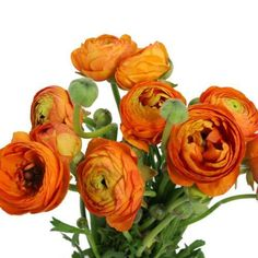 I love love LOVE ranunculus! These orange beauties would be a focal point in my wedding bouquet