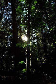 Peeking through - Vancouver Island  Katja Wulfers©