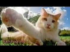 Funny Videos - Best of Cute Cats - Happy New Year 2015 - Funny Cats, Funny Animals - http://www.gigglefinger.com/funny-videos-best-of-cute-cats-happy-new-year-2015-funny-cats-funny-animals/