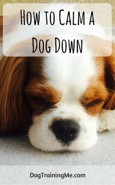 How to calm a dog down. Learn why it is important to keep your dog calm and the signs that your dog is feeling fear, stress, or anxiety. Click through for our list of natural ways to keep your dog calm.