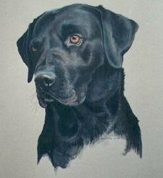 black lab artwork | Black Labrador Paintings