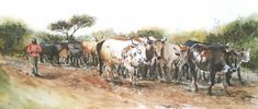 """""""His Pride and Joy"""". Nguni cattle being herded near Amatikulu, KwaZulu Natal, South Africa. Watercolour and ink on Bockingford paper. Watercolor And Ink, Watercolor Paintings, Kwazulu Natal, Watercolours, Cattle, South Africa, Pride, Wildlife, African"""