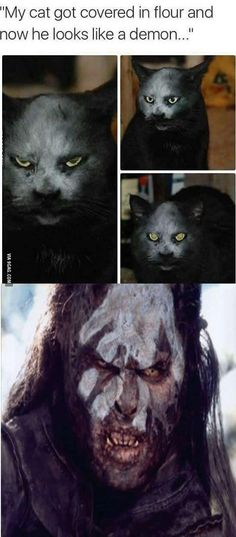 My first thought was Uruk Hai Cat