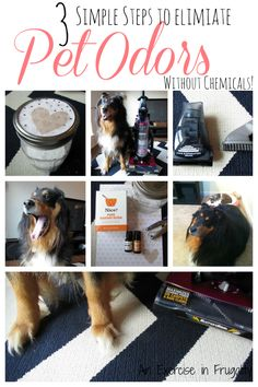 3 Simple Steps to a Clean-Smelling Home - using a great pet hair vacuum (that is SO budget-friendly) and this simple all-natural carpet freshener you can make for pennies, you can make your carpets look and smell amazing without chemicals!  #EurekaPower #ad