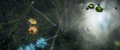 Annihilation Movie, New Friends, Cinematography, Dandelion, Nature, Flowers, Plants, Image, Naturaleza