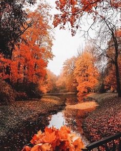 All Nature, Science Nature, House Nature, Autumn Aesthetic, Fall Halloween, Beautiful Places, Scenery, Seasons, Nice