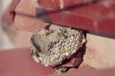 Watch for Wasp Nests-U of MN Extension