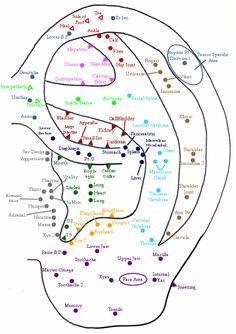 TCM Student: Ear Chart