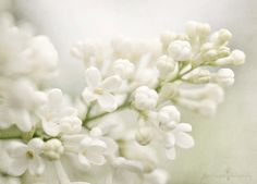 at least these are white... :) by Kim Klassen, via Flickr